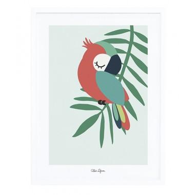 Affiche encadrée perroquet...